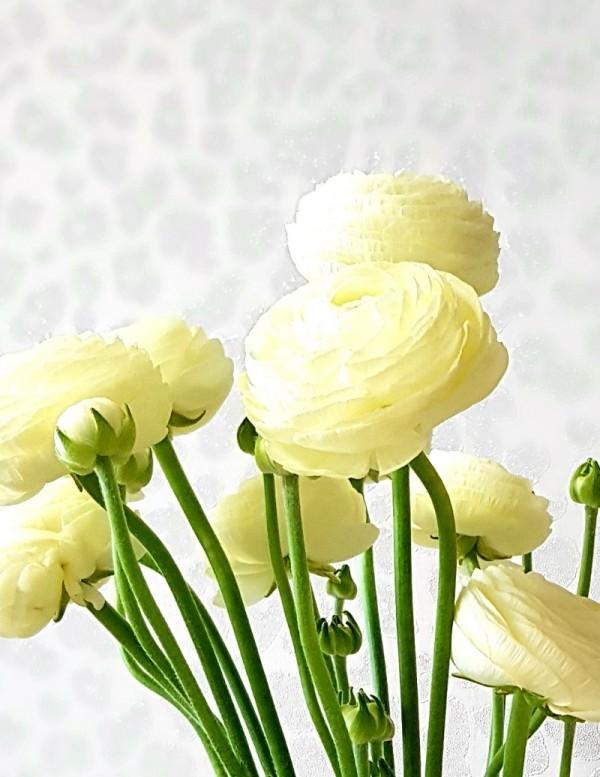 꽃사진 2.jpg