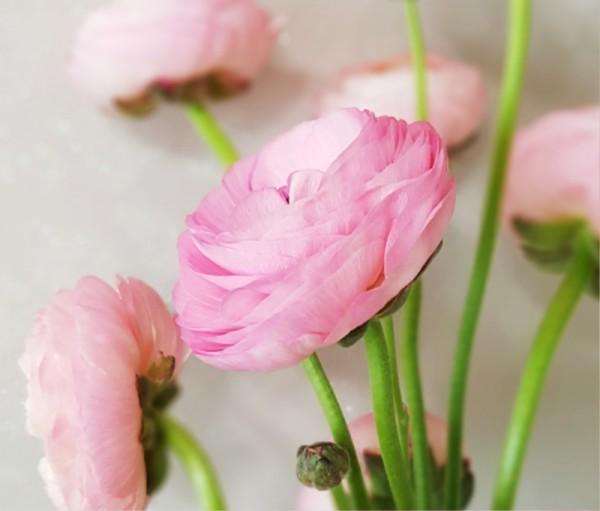 꽃 사진1.jpg