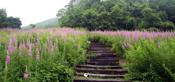한국자생식물원.jpg